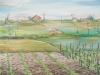 Pianura a primavera (olio su carta telata) 50x60